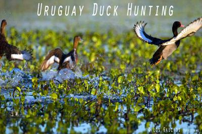 Duck Hunting in Uruguay