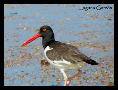 Laguna Garzon Fauna